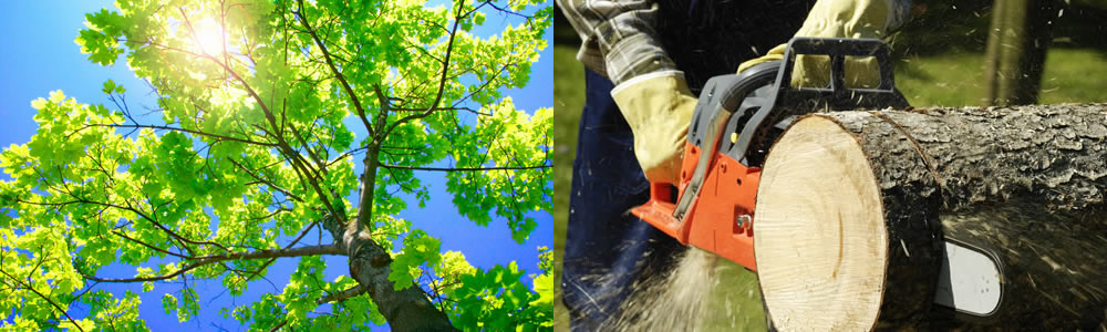 Tree Services Inglewood